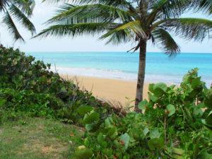 la-selva-puerto rico beach